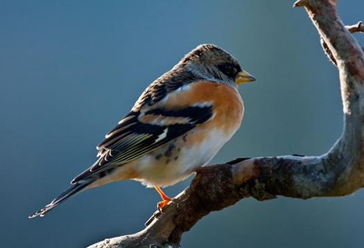 Bale - Osservazione degli uccelli